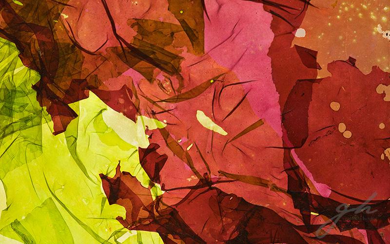 Alga roja verde